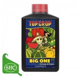 Big One | Top Crop