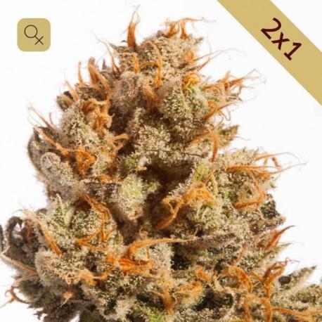 Pure Amnesia Promoción 2x1 · Mr Natural Seeds