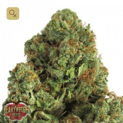 Midnight Mass · Heavyweight Seeds