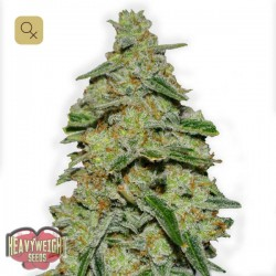 Lemon Cheesecake · Heavyweight Seeds