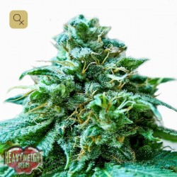 Superb OG · Heavyweight Seeds